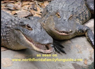 Alligator Farm, St. Augustine, Florida