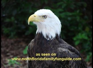 Audubon Center for Birds of Prey - Maitland, Florida