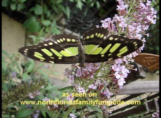 Butterfly Encounter at Lukas Nursery - Oviedo, Florida