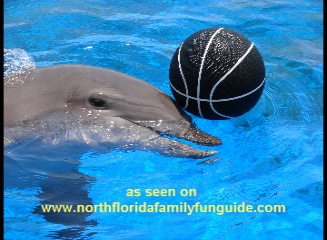 Marineland dolphin playing