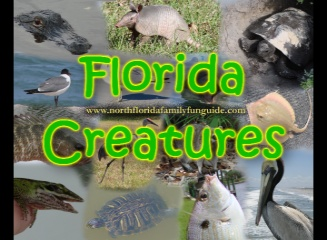 Florida Creatures - A Florida Wildlife Presentation
