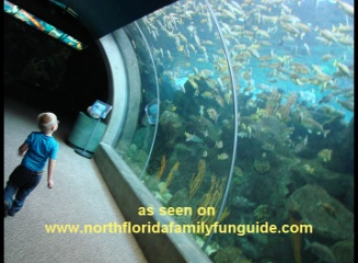 Florida Marine Aquariums