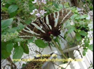 Greathouse Butterfly Farm - Earleton, Florida