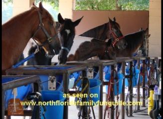JNB Horse Haven Farm - Lady Lake, Florida
