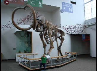Florida Museum of Natural History, Gainesville