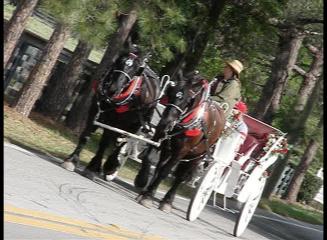 Ocala Carriage and Tours, Ocala