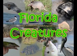 Florida Creatures - A Florida Wildlife Presentation