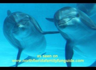 Gulfarium - Fort Walton Beach, Florida