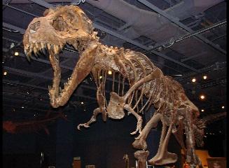 tyrranisaurus rex, orlando science center